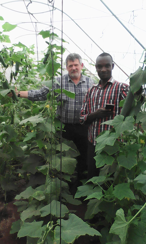 Kenya Greenhouse nursery cucumbers2016 020