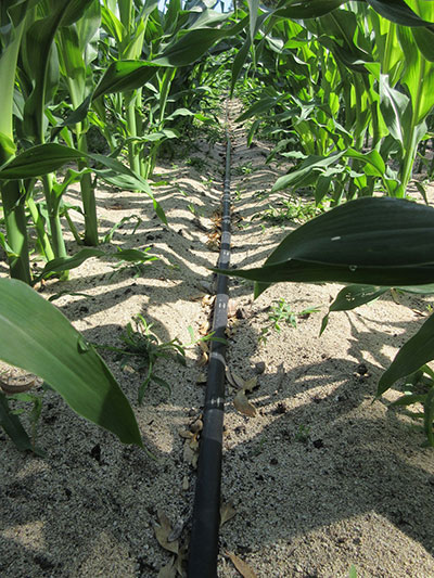 Hydretain installation for corn in Calabria Italy through Irritec Italy2